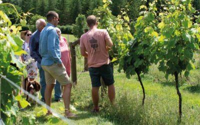 Devon vineyard tour