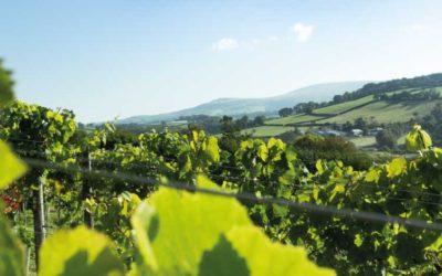 Dartmoor vineyard views