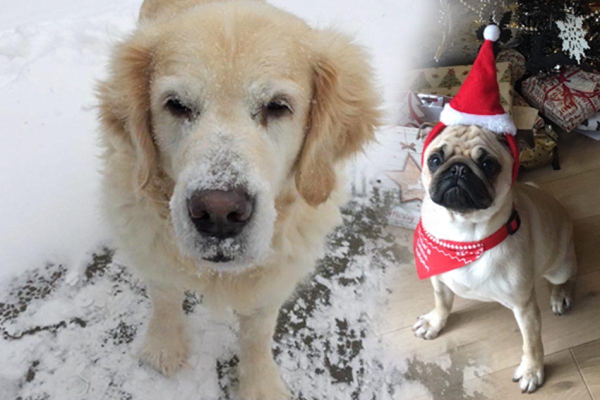 Visit_Dartmoor_dogs